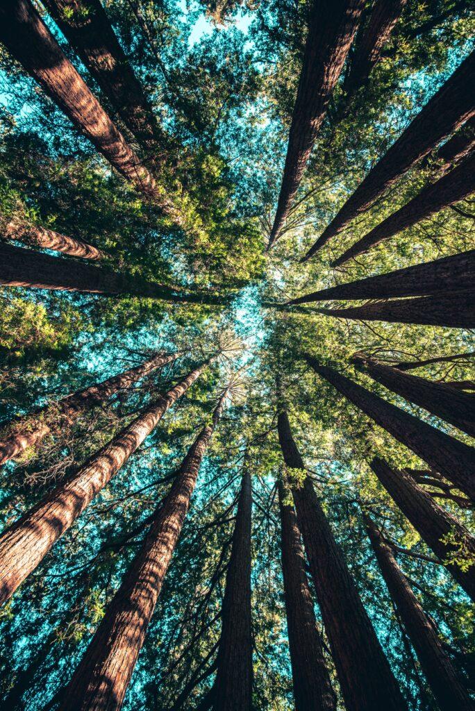 La luce del sole splende attraverso i rami degli alberi di una foresta.