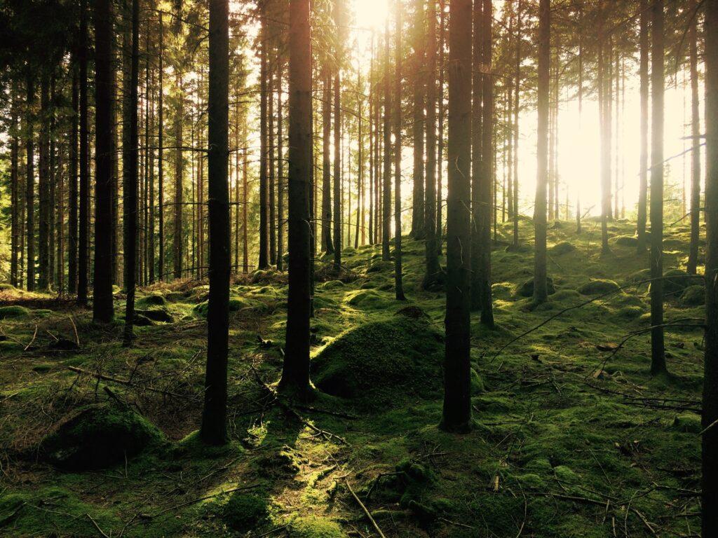 Facciamo una passeggiata nel bosco?
