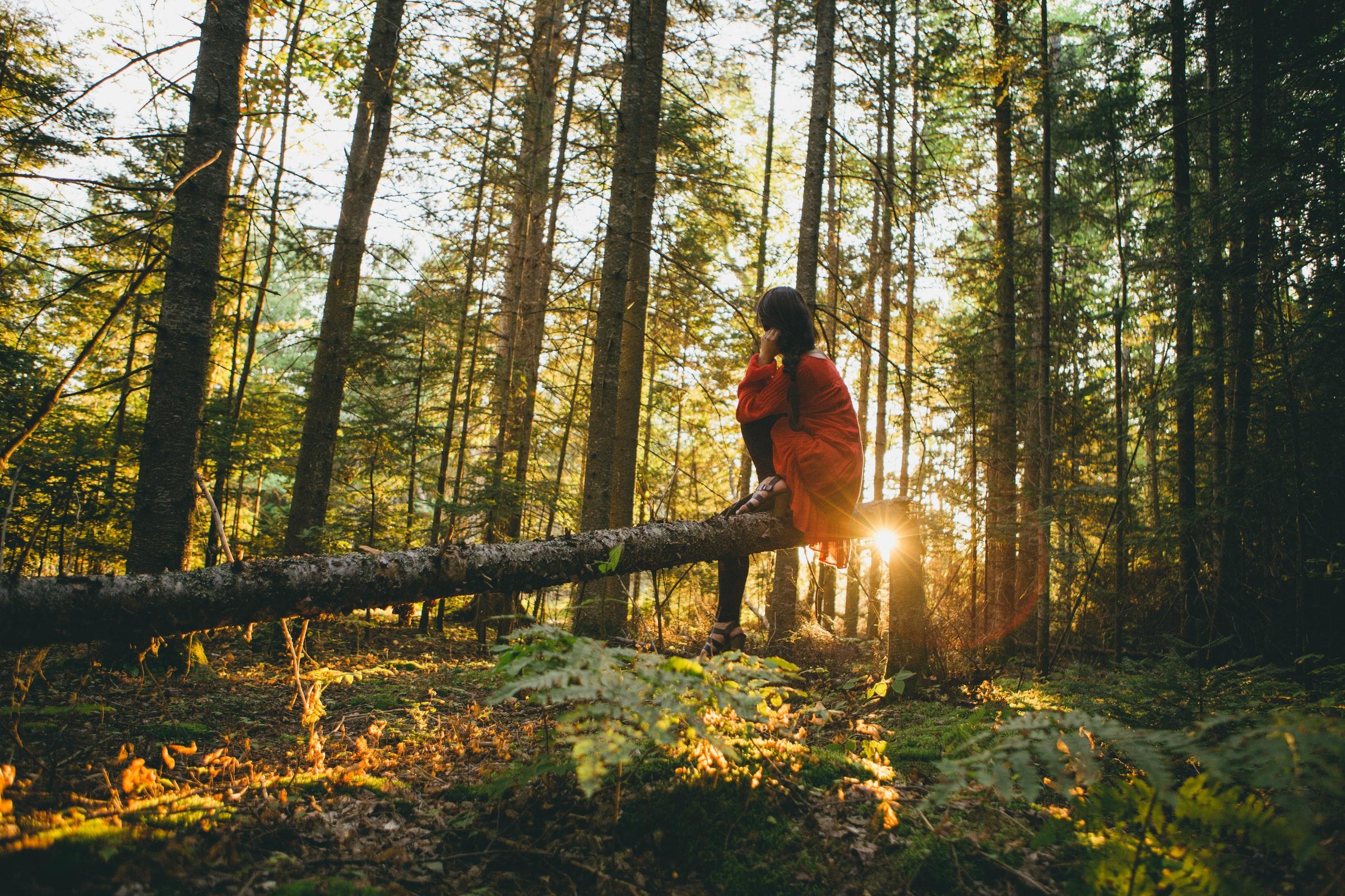 Benessere grazie alla foresta: guida dei 10 benefici del Forest Bathing