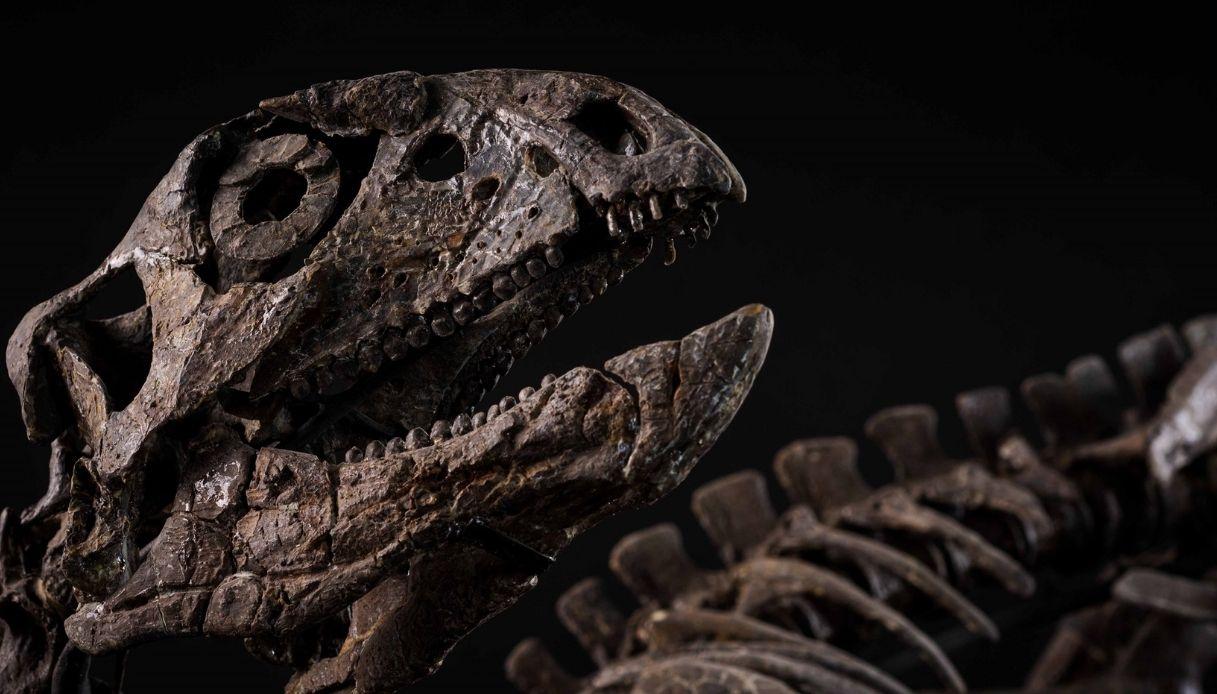 Venduto a Milano, per 300 mila euro, lo scheletro di un dinosauro risalente al Giurassico superiore.